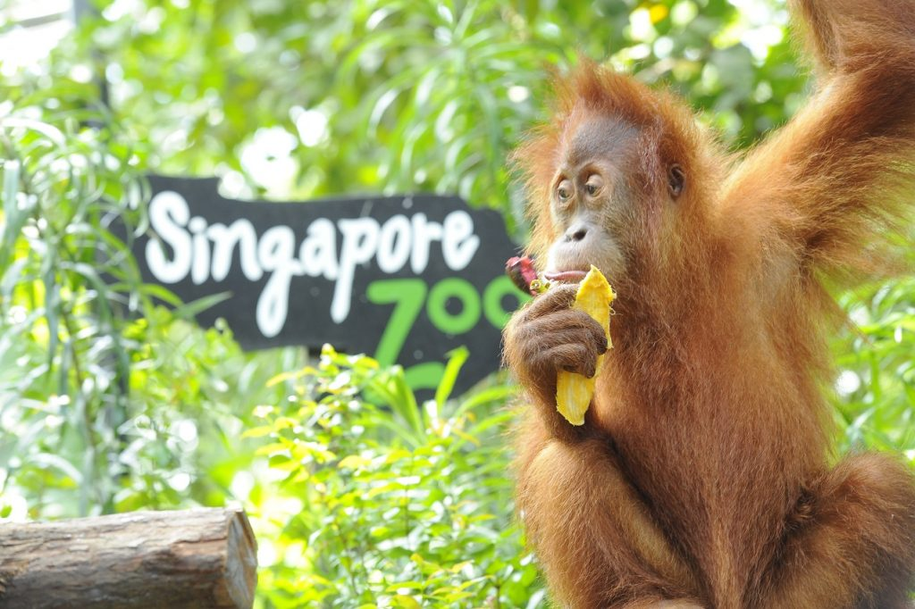 """Take a """"Trip"""" to Singapore Zoo this Saturday for a little Weekend Show"""